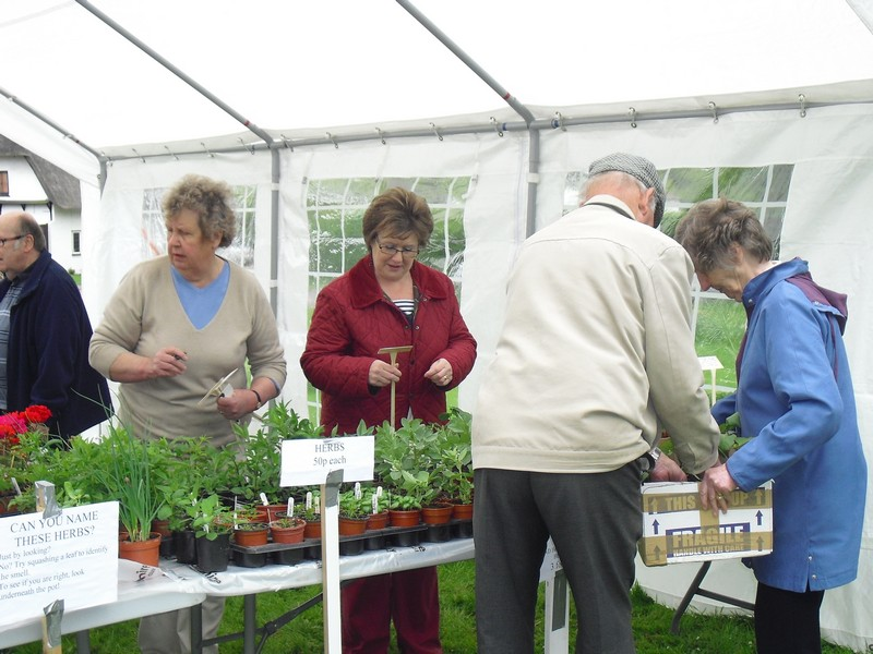 Plant Sale May 2013 005